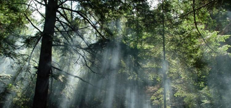 """Acção de Prevenção e Sensibilização """"Floresta Protegida 2015"""""""