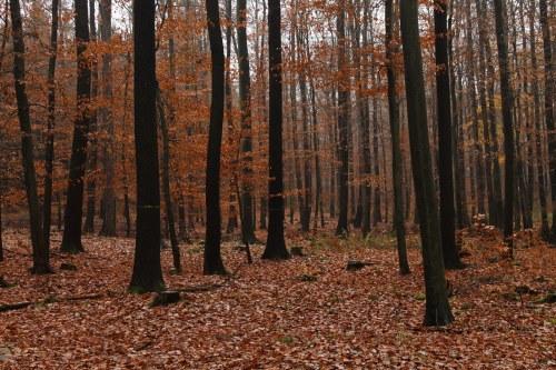 """Ação de Sensibilização """"Operação Floresta Segura 2019"""""""